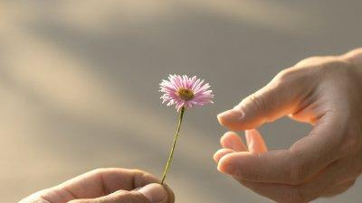 main tend fleur autre main